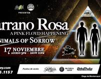 Thumb_marrano-rosa-cover